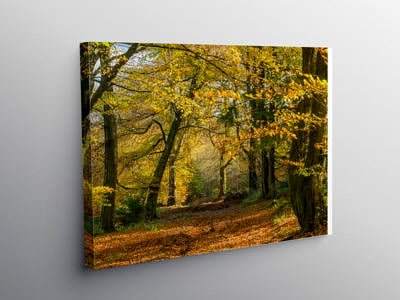 The Wentwood Forest Monmouthshire in Autumn on Canvas
