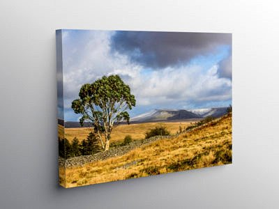 The Brecon Beacons Eucalyptus Tree on Canvas