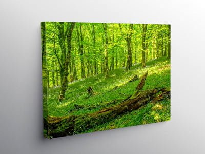 Bluebell Woods at The Wenallt Cardiff on Canvas