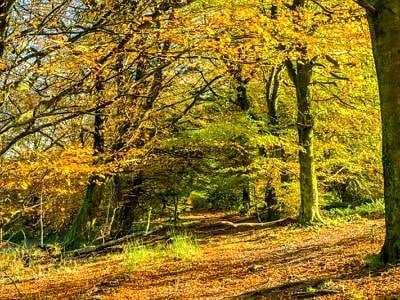 The Wentwood Forest Monmouthshire in Autumn