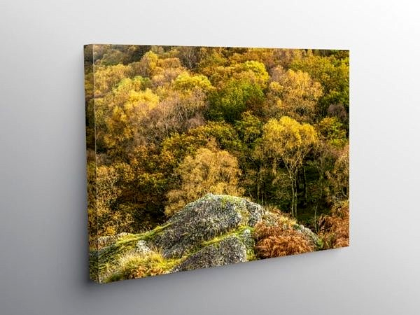 Dinas Woods in Autumn Upper Tywi Valley, Canvas Print