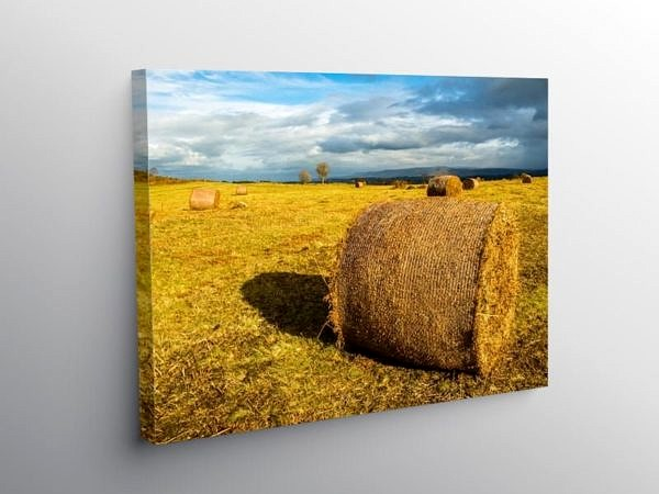 Bracken Bales in the Brecon Beacons, Canvas Print