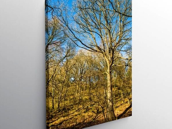 Winter Woodland Vale of Neath, Canvas Print