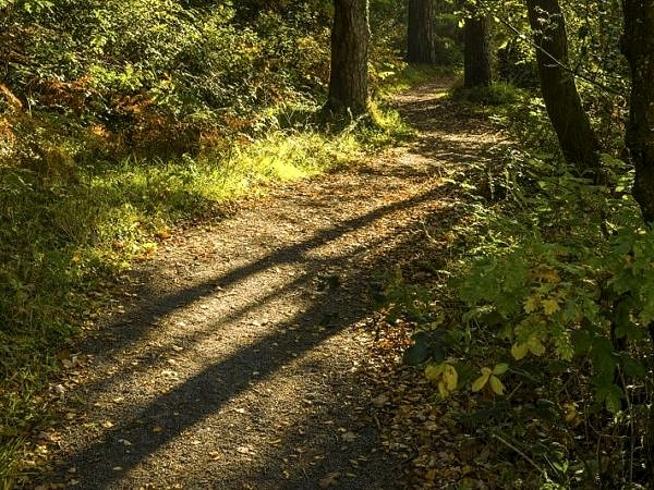 Long Shadows of Autumn Hensol Forest