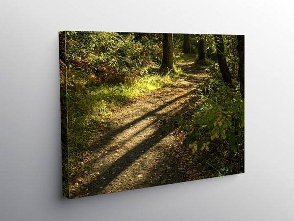 Long Shadows of Autumn Hensol Forest, Canvas Print