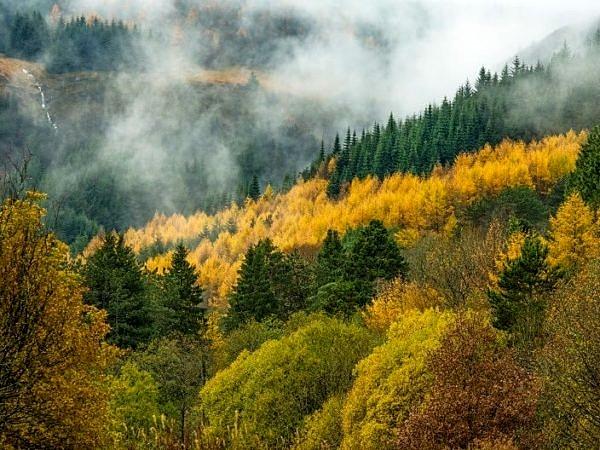 Rhondda Forest at Blaencwm South Wales
