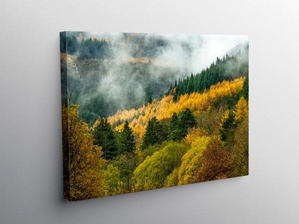 Rhondda Forest at Blaencwm South Wales, Canvas Print