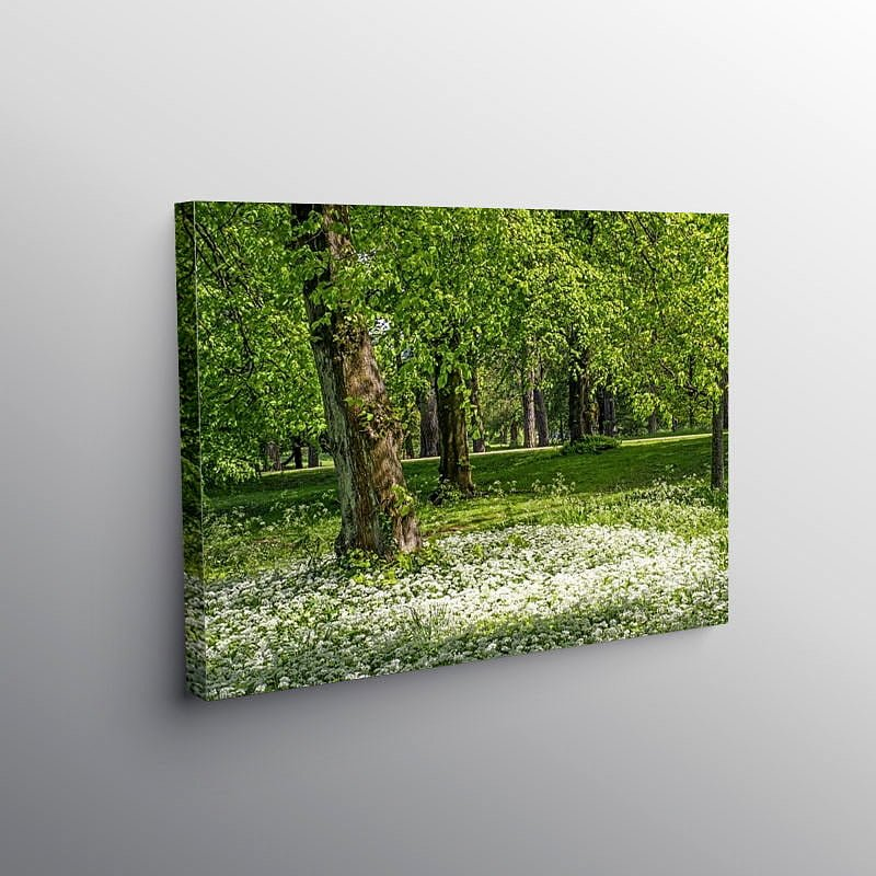 Spring Woodland and Ramsons Bute Park Cardiff, Canvas Print