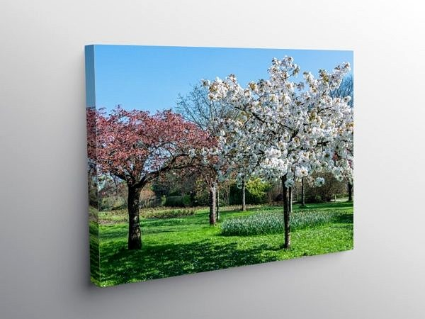 Spring in Roath Park Cardiff, Canvas Print