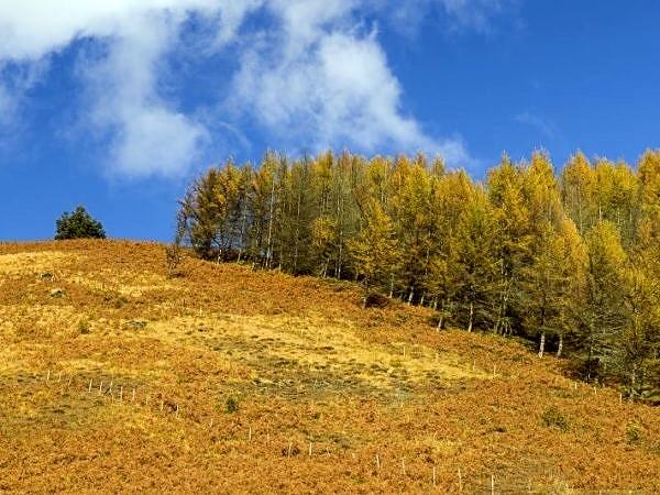 Autumn in the Rhondda