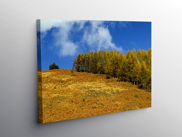 Autumn in the Clydach Vale Rhondda, Canvas Print