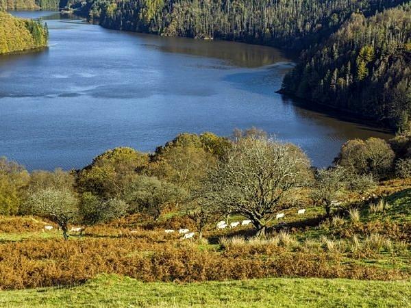 Llyn Brianne Reservoir Mid Wales
