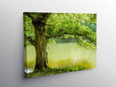 Oak Tree on the banks of the River Lliw near Swansea, Canvas Print