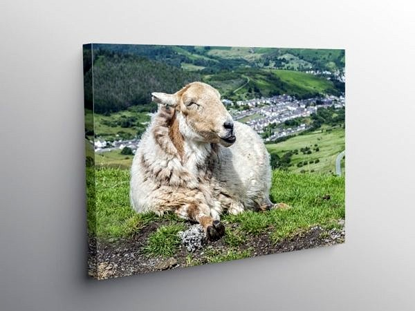 Sheep Guarding the Rhondda Valley, Canvas Print