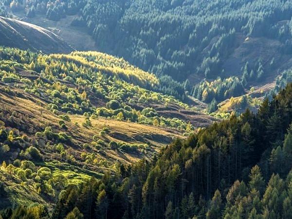 Upper Blaencwm Valley in the Rhondda Fawr