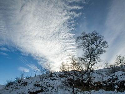 Winter Tree and Sky Brecon Beacons