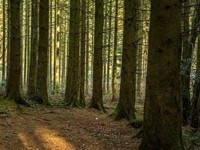 Ynysmaelog Forest Llantrisant