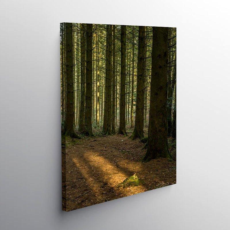 Ynysmaelog Forest Llantrisant Rhondda Cynon Taff, Canvas Print