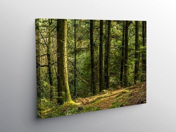 Ynysmaelwg Forest Llantrisant, Canvas Print