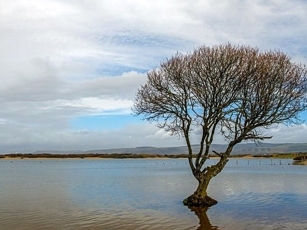The Kenfig Pool Solitary Tree