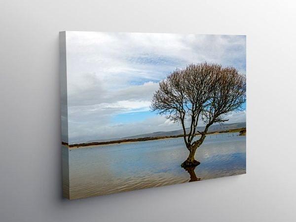 The Kenfig Pool Solitary Tree Bridgend, Canvas Print