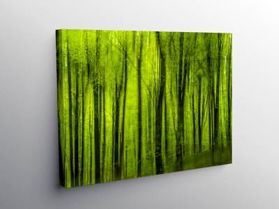 The Tongwynlais Forest Cardiff, Canvas Print