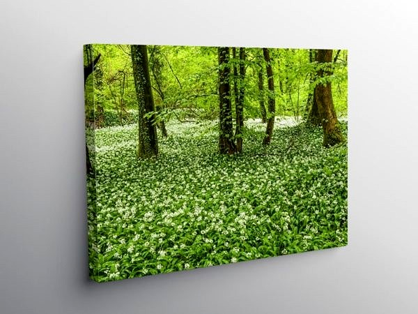 Ramsons in Fforest Ganol Woods Cardiff in Spring, Canvas Print