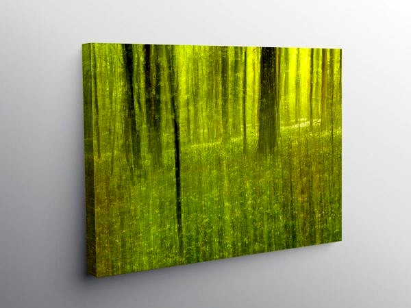 Spring in the Fforest Ganol Cardiff, Canvas Print