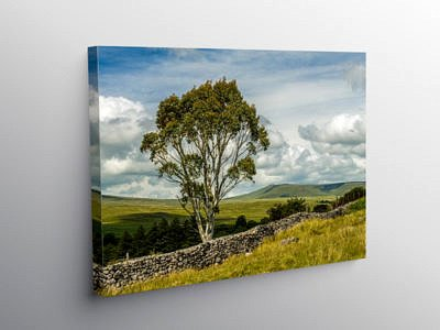 Eucalyptus Tree in the Central Brecon Beacons, Canvas Print