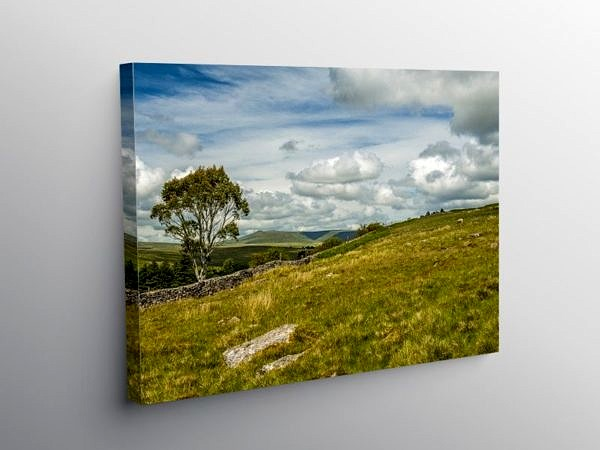 Eucalyptus Tree in the Brecon Beacons, Canvas Print