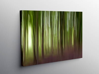 The Wentwood Forest Monmouthshire, Canvas Print