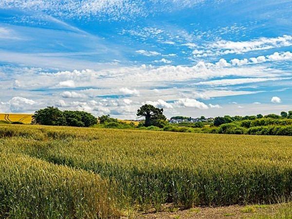 Corn Fields Vale of Glamorgan
