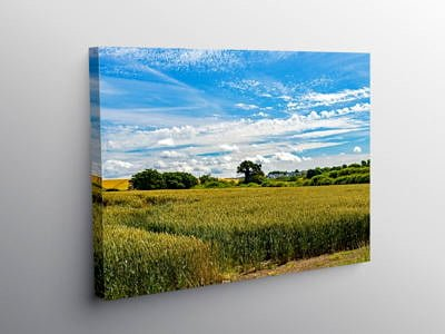 Wheat Fields in the Vale of Glamorgan, Canvas Print