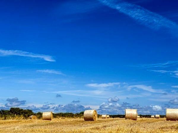 Summer Harvest Vale of Glamorgan