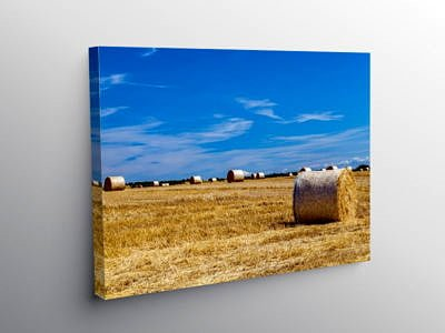 Summer Harvest, Canvas Print