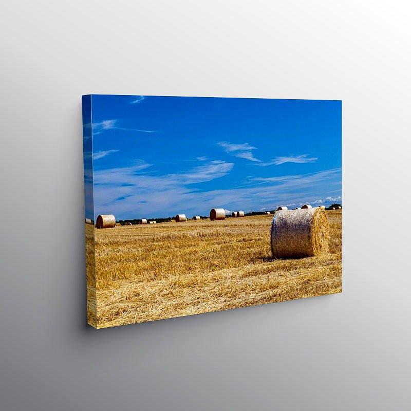 Summer Harvest, Canvas Print