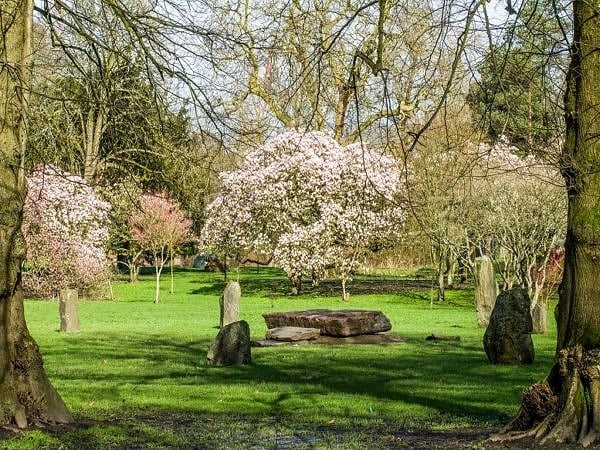 Bute Park Cardiff in Spring