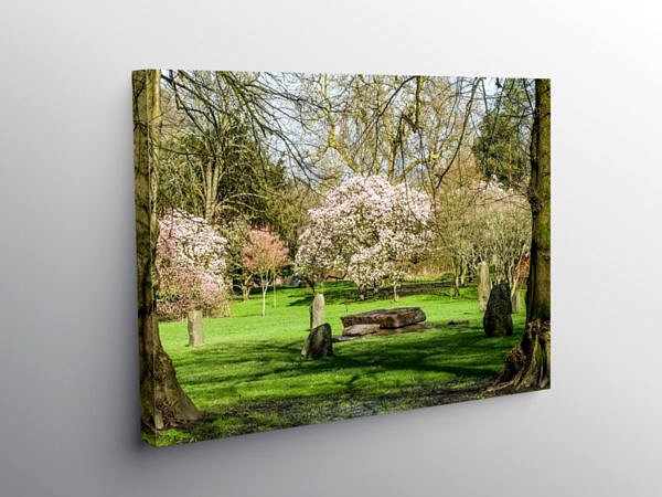 Bute Park Cardiff in Spring, Canvas Print