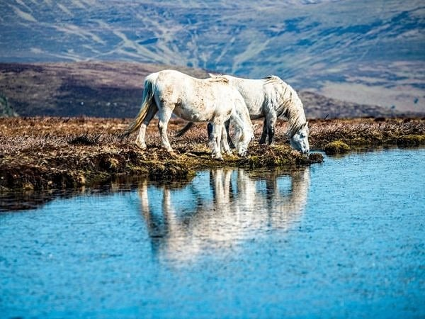 Two White Horses Myndyy Llangorse