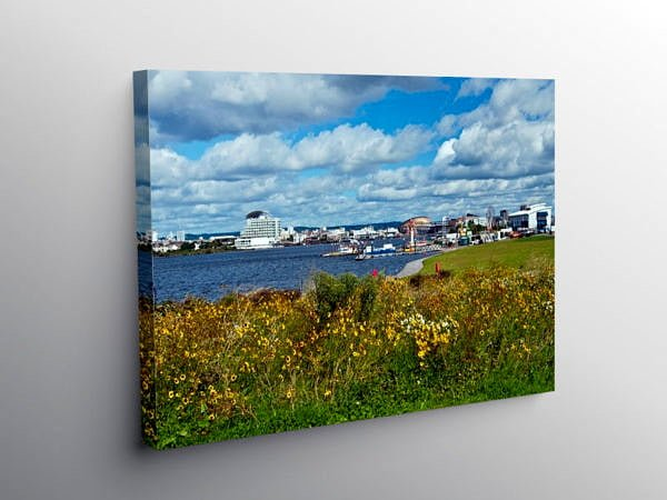Cardiff Bay Barrage Wild Flowers Cardiff, Canvas Print