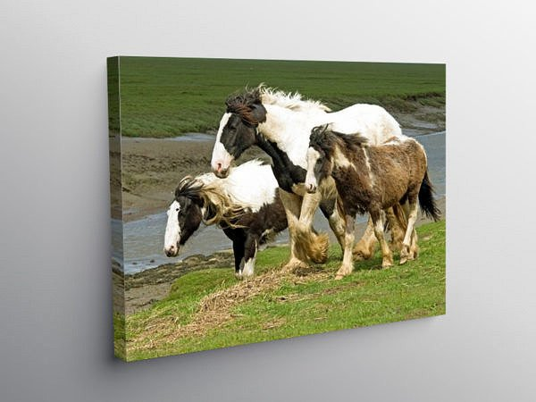Heavy Horses at Penclawdd Gower, Canvas Print