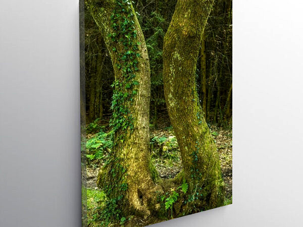 Wentwood Forest with two trees almost touching, Canvas Print