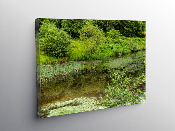 Clydach Upper Pond with a Heron Rhondda Fawr, Canvas Print