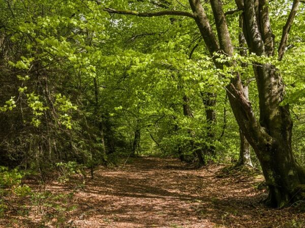 Woodland walk in Hensol Forest South Wales