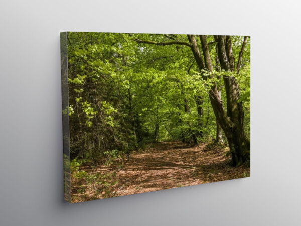 Woodland walk in Hensol Forest South Wales, Canvas Print