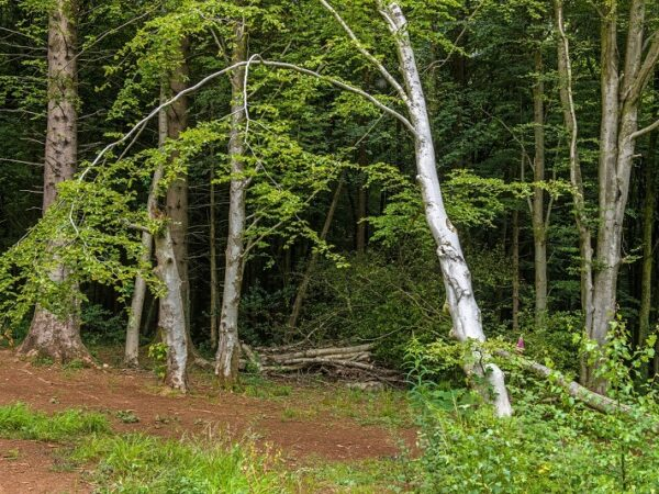 Fforest Fawr Woods near Cardiff