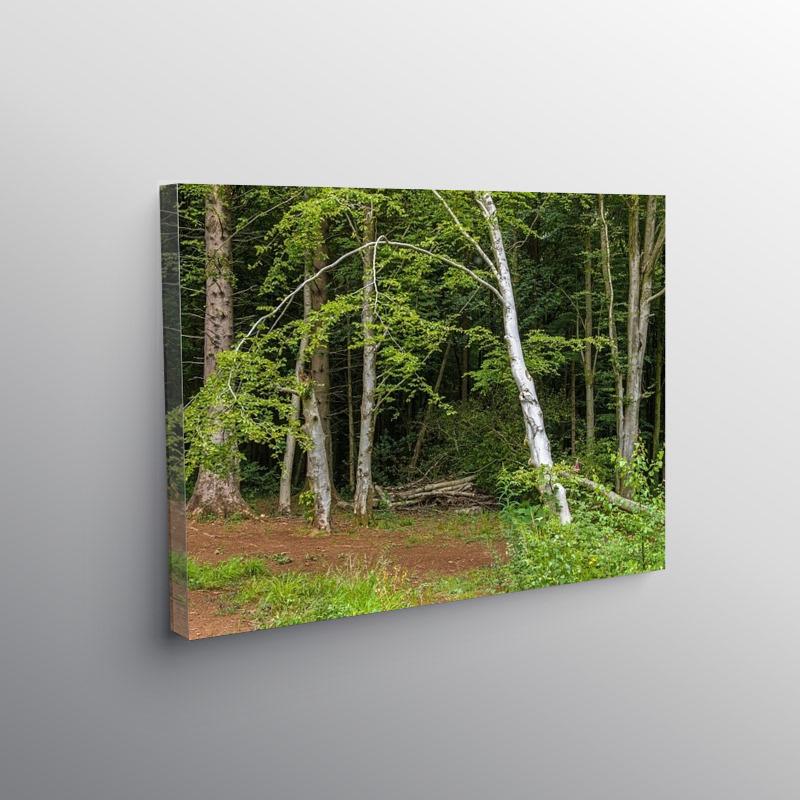 Fforest Fawr Woods near Cardiff, Canvas Print