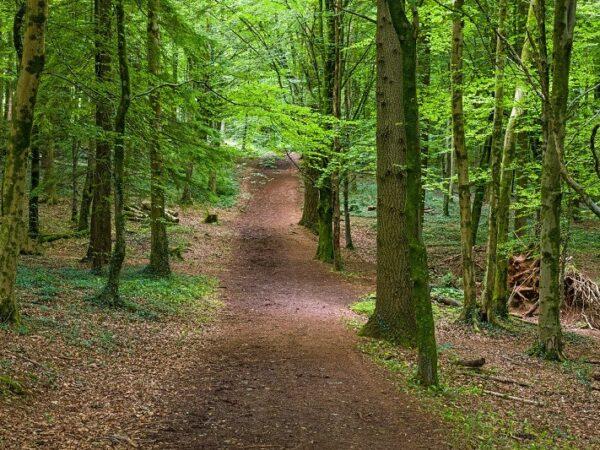 Fforest Fawr woodland area near Cardiff