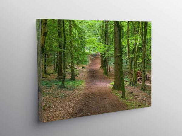 Fforest Fawr woodland area near Cardiff, Canvas Print