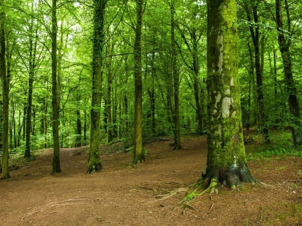 Fforest Fawr near Cardiff South Wales